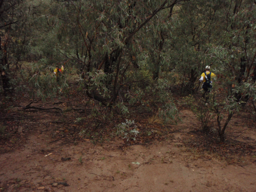 Some sections of thicker scrub at Farrer