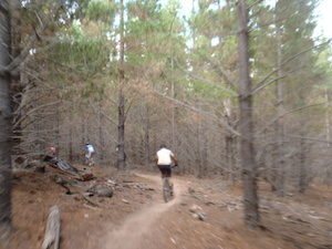 Blurry photo of riders in forest