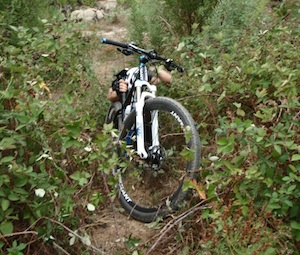 Pushing a bike through a blackberry bush.